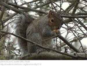 Squirrel (Joe)