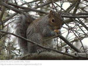 Squirrel (Joe)